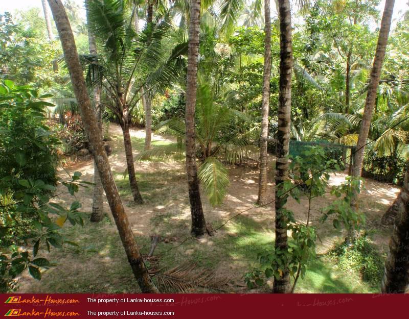 Flora And Fauna Mirissa Mirissa Matara South Sri Lanka