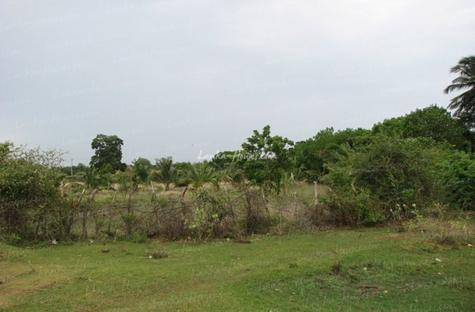 Bare land on the Yoda lake near Kirinda. 2.5 acre
