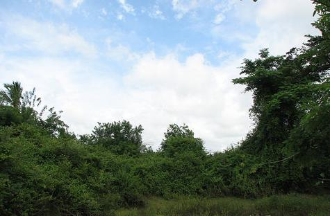 62 acre land for sale