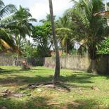 Beach land in Boosa, with coconut palms.