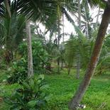 Beach land near Galle in Boosa,
