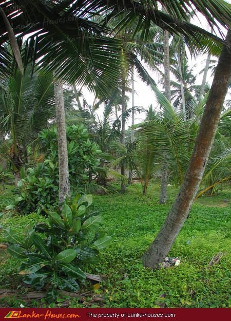 Around Hikkaduwa: Beach Land Near Galle In Boosa,, Hikkaduwa, Galle, South