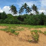 Beach Land in Rathgama, Boosa.