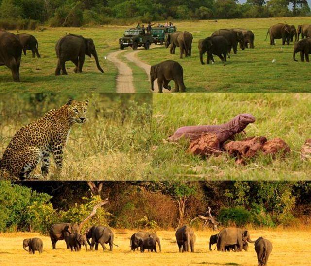Garden City Jeep >> Minneriya Jeep Safari