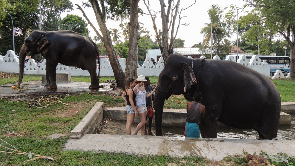 Elephant Riding in Dondra Temple