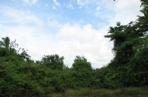 Land for sale. 5 km from Tangale. 4.5 acre