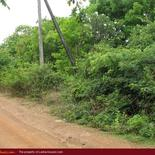 Green land for sale. 5 acre.