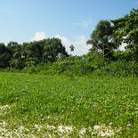 Perfect Land in Talala with constructions plan