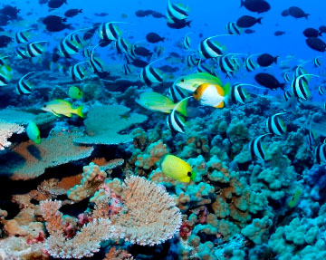 The coral reef of Hikkaduwa